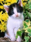 cat g