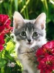 cat c