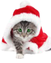 cat-xmas-page-a